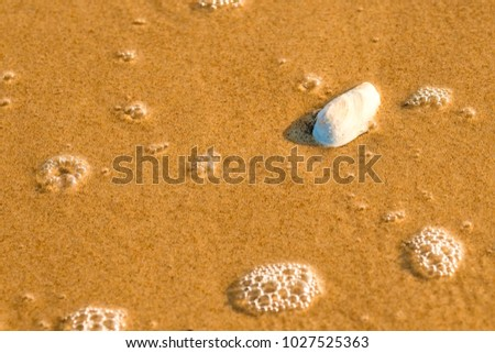 sandy beach with shell and spray of the surf #1027525363