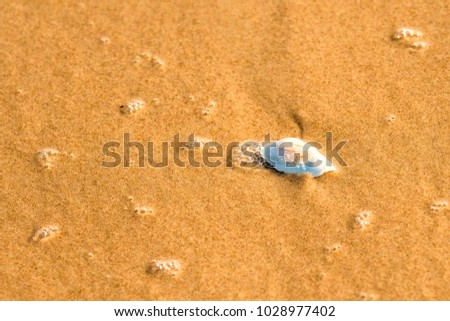 sandy beach with shell and spray of the surf #1028977402