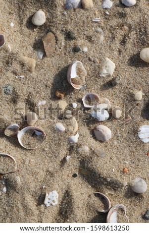 Sandy shoreline beach with pebbles and seashells