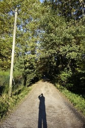Sandy trail  leading into a tunnel like forest with power line and me as photographer casting a shadow, Ludwigswinkel, Fischbach, Rhineland Palatinate, Germany
