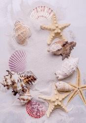 Sandy Travel background with seashell and starfish. Top view marine Vacation background.