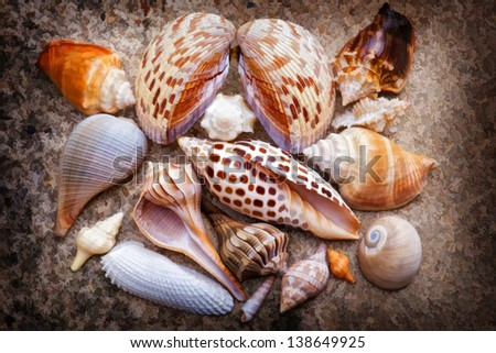 Sanibel Island Seashell Collection
