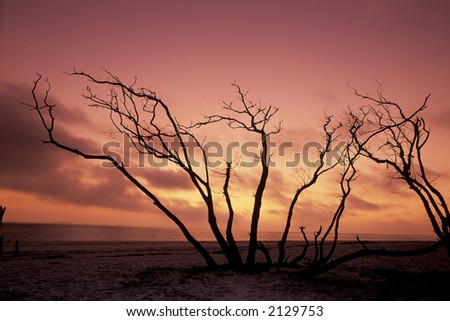 sanibel island pictures. stock photo : Sanibel Island