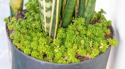 Sansevieria Leaves Succulent Plant Green Nature Espada de Sao Jorge Suculenta Planta Verde Natureza