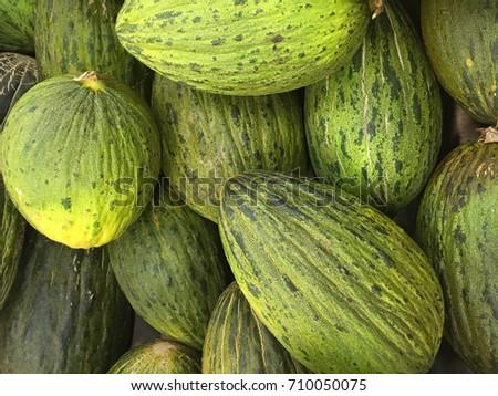 Santa Claus melons. Christmas melons. piel de sapo melons harvest
