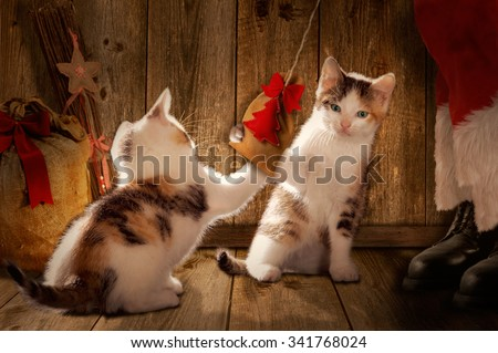 Santa Claus playing with cats, Christmas present for cats
