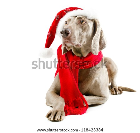 santa dog  isolated on white background