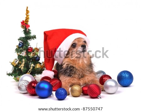 Santa dog with Christmas decorations, against white background