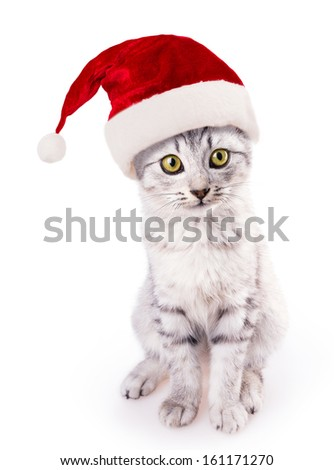 santa hat cat isolated on white background