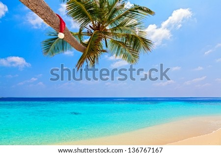 Santa hat is on palm tree,  Maldives, The Indian Ocean
