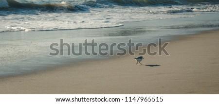 Santa Monica  pier, LosAngeles #1147965515