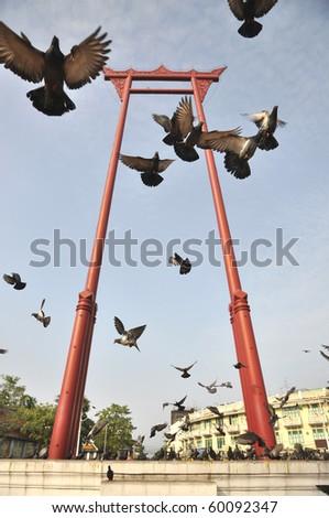 Sao Chingcha Thailand Flying Pigeon