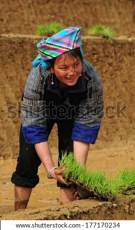 SAPA VIETNAM JAN 15 An unidentified Hmong woman with smile working on the rice fields Hmong tribe is one of the famous tribal minorities in Vietnam On Jan 15 2014 in Sapa Vietnam