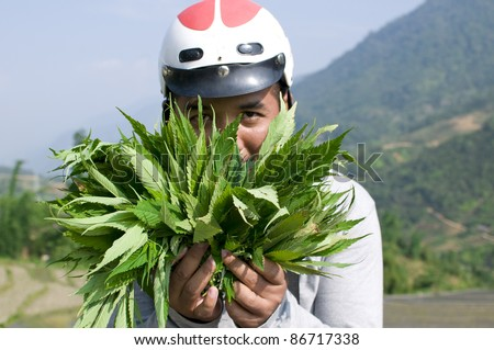 SAPA, VIETNAM-MAY 28:An unidentified man holds a handful of marijuana hemp leaf on May 28, 2011 in Sapa, Vietnam. Marijuana are sold commonly, yet discreetly by minority people on the streets of Sapa.