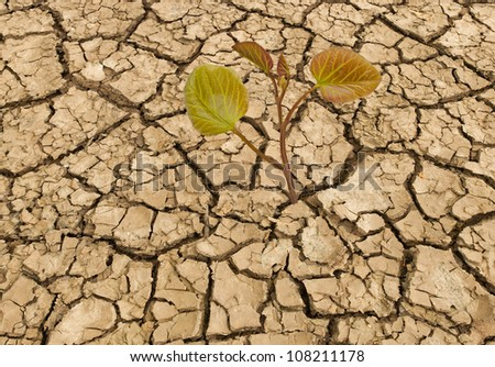 sapling growing from arid land