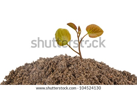 sapling growing from soil