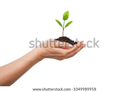 Sapling with woman hand carried  and isolated white background. - Shutterstock ID 1049989958