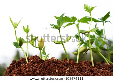 Saplings growing from soil- beginnings