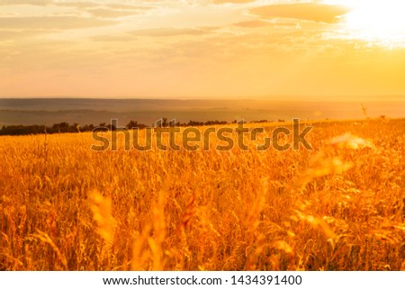 Saratov region, travel, landscape and nature of Russia. Yellow golden orange dramatic dawn at dawn or dusk over endless fields, hills, meadows. The sun rises in the morning above the horizon #1434391400