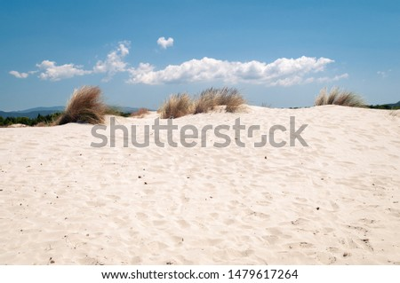 Sardinia, beach of the dunes. Panoramic view of white sand dunes with ammophila shrubs. These shrubs are used for dune formation #1479617264