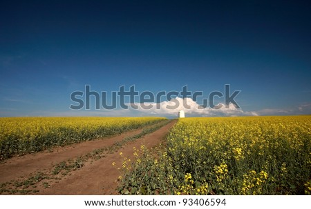Saskatchewan country road between fields of canola
