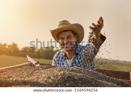 Satisfied handsome farmer with straw hat holding tablet and throwing sunflower seed in air from trailer full of grains during harvest