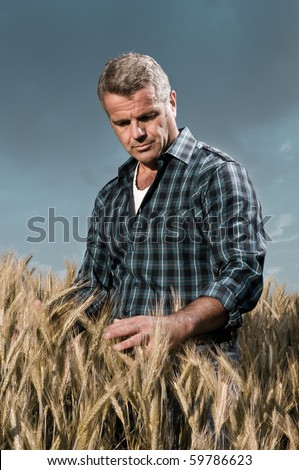 Satisfied mature farmer touching with care his ripe wheat field before the harvest, dramatic light