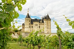 Saumur Castle, ancient french Loire castle in front of vineyard