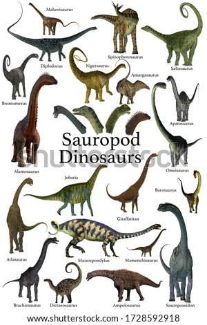 Sauropod Dinosaurs 3D illustration - This is a collection of herbivorous sauropod dinosaurs who have long necks and tails with small heads.