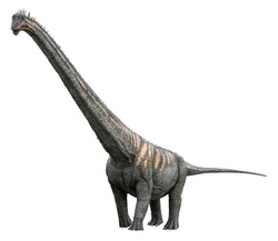 Sauroposeidon is a herbivore genus of Sauropod dinosaur and lived in the Cretaceous period, Sauroposeidon isolated on white background with clipping path