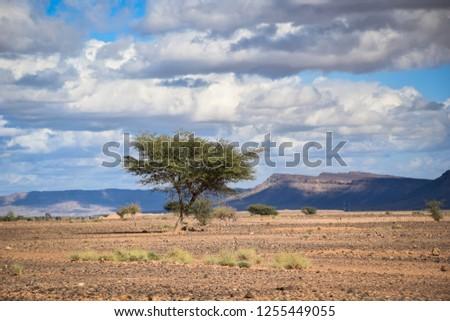 Savana in Africa Foto stock ©