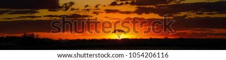 Savana sunset behind tree Foto stock ©