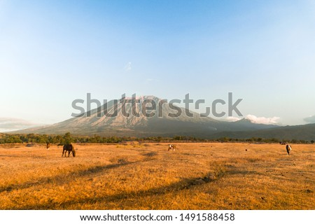 Savana tianyar is the best epic view for see mount agung. Foto stock ©