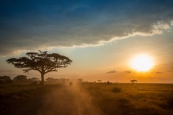 Savanna. Africa, Masai mara natural Park. Different landscapes.
