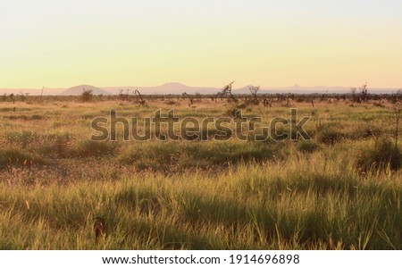 Savanna at sunset, Madikwe Reserve, South Africa. Panoramic view. beautiful and colorful sky in the background. Stock foto ©