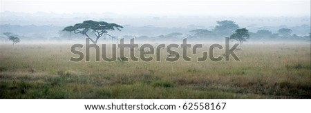 Savanna in a morning fog. A morning landscape, a fog in savanna, acacias.