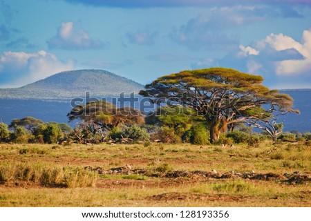 Savanna landscape and its flora in Africa, Amboseli, Kenya