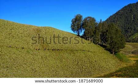 Savanna Oro Oro Ombo, Mount Semeru, Indonesia Foto stock ©