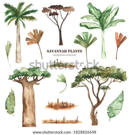 Savanna plants, palm trees, baobab, acacia, leaves, grass, dried flowers watercolor clipart Photo stock ©