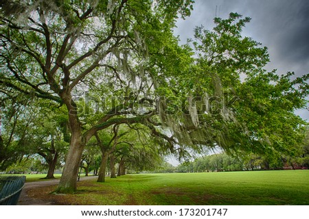 Savannah Georgia\'s, many parks are filled with huge Southern Live Oaks covered with Spanish Moss. Beautiful after a rain.