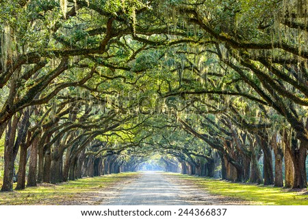 Savannah, Georgia, USA oak tree lined road at historic Wormsloe Plantation. Stockfoto ©