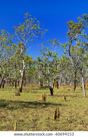 Savannah landscape with termite mound. Kakadu national park. Australia