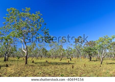 Savannah landscape with termite mound. Kakadu national park. Australia