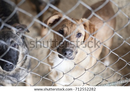 Save me. Photo of stray dogs that live in the shelter. The concept of pets. Dogs. Cats. Animal shelters.