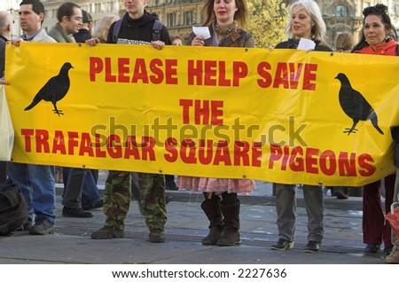 Save the pigeons in Trafalgar Square,  London, England, UK