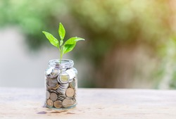 Saving concept plant growing In jar of Coins - Investment And saving Concept
