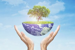 Saving Earth concept. Human hands holding Earth with a tree