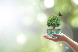 Saving environment and natural conservation concept with tree planing on green globe earth on volunteer's hands: Elements of this image furnished by NASA