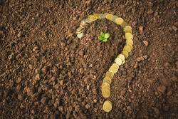Saving money concept and money coin shape question mark with tree growing for business