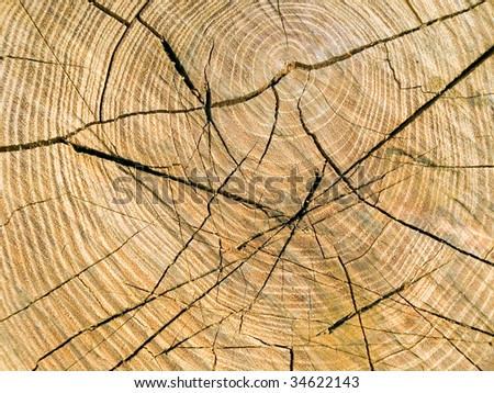 Saw cut wood cracked closeup background.